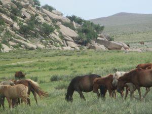 Mongolei: Pferde, hügeliges Weideland, unendliche Wildnis
