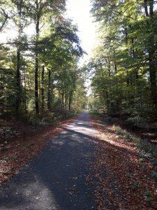 Waldweg - Fit und gesund bleiben durch Bewegung